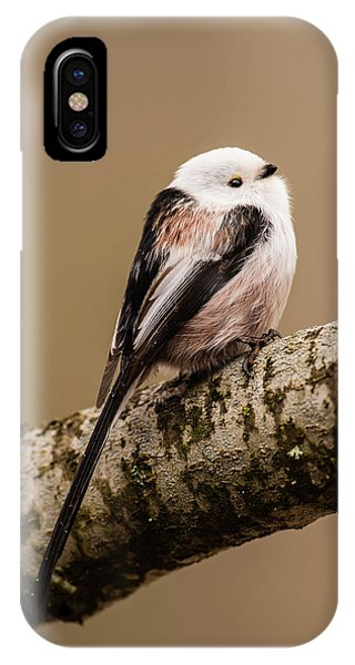 Long-tailed Tit On The Oak Branch IPhone Case