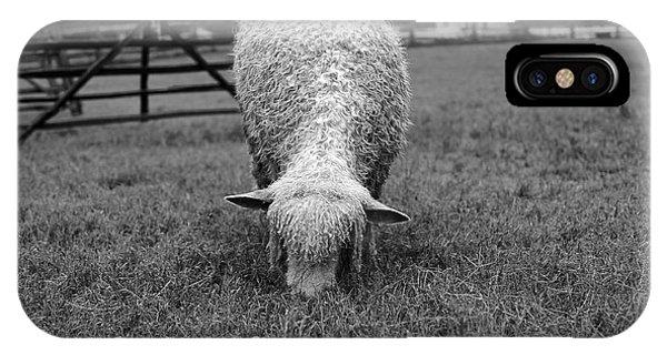 Longwool Sheep Grazing IPhone Case