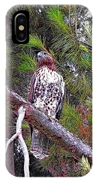 Looking For Prey - Red Tailed Hawk IPhone Case