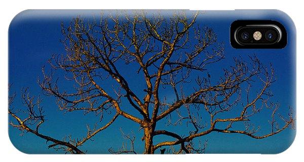 Looking Up, Sunrise, Myakka State Forest IPhone Case