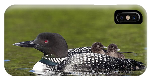 Loon Taxi IPhone Case