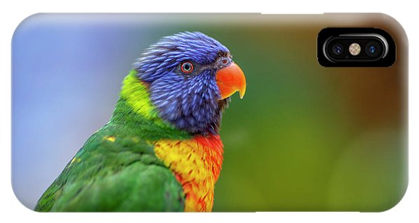 Lorikeet 2 IPhone Case
