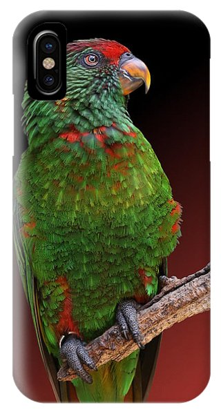 Lorikeet Portrait IPhone Case