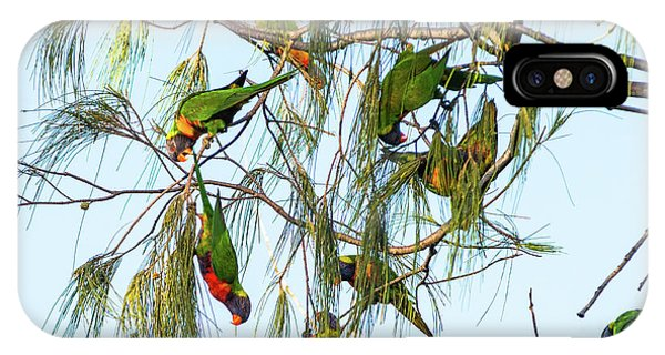Lorikeets Swarming From Tree To Tree IPhone Case
