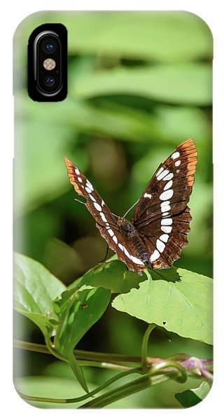 Lorquin's Admiral Butterfly IPhone Case