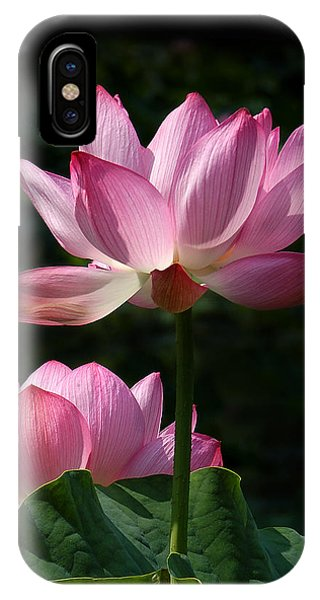 Lotus Beauties--upstaged Dl048 IPhone Case