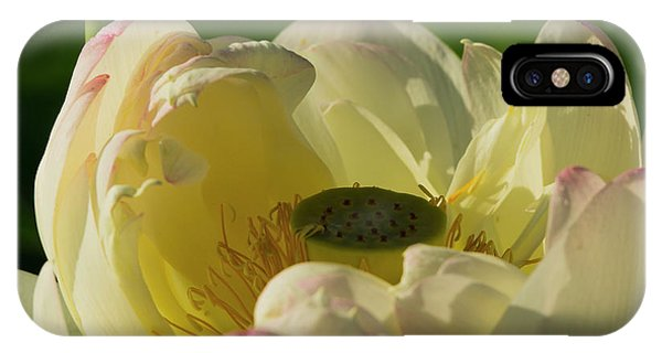 IPhone Case featuring the photograph Lotus Flower 4 by Buddy Scott