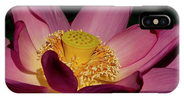 IPhone Case featuring the photograph Lotus Flower 6 by Buddy Scott