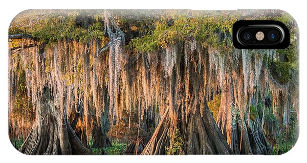 Bald Cypress iPhone Case - Louisiana Swamp Giant Bald Cypress Trees Two by Bill Swindaman