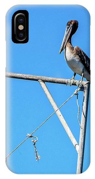 Louisiana's State Bird IPhone Case