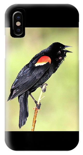 IPhone Case featuring the photograph Love Song by Shane Bechler