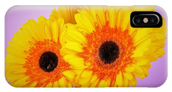 Lovely And Beautiful - Gerbera Daisies IPhone Case