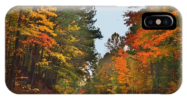 Lovely Autumn Trees IPhone Case