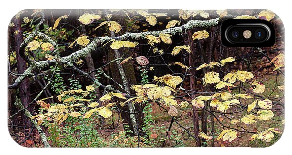 Lovely Autumn Witch Hazel -   IPhone Case