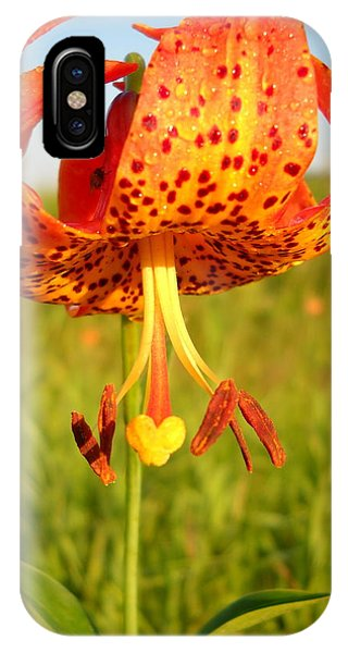 Lovely Orange Spotted Tiger Lily IPhone Case
