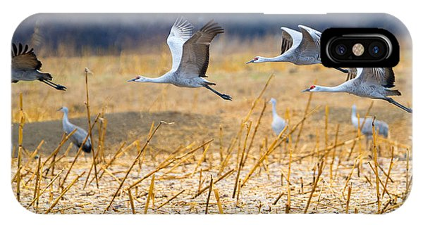 Sandhill Crane iPhone Case - Low Level Flyby by Mike Dawson