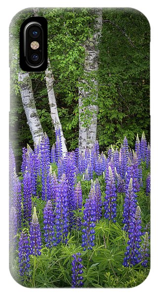 Lupine And Birch Tree IPhone Case