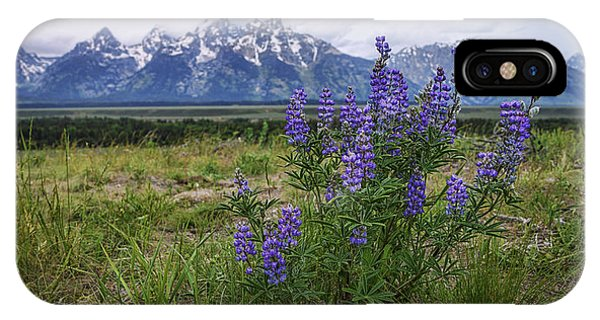 Teton iPhone Case - Lupine Beauty by Chad Dutson