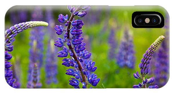 Lupine Curves IPhone Case