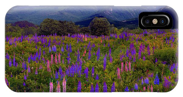 Lupine Field In Franconia Range IPhone Case