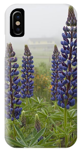 Lupine In The Fog IPhone Case