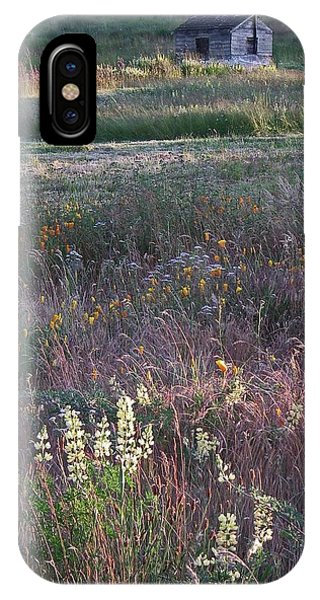 Port Townsend iPhone Case - Lupine by Laurie Stewart