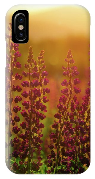 Lupines At Dawn IPhone Case