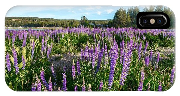 Lupines At Lake Tahoe IPhone Case