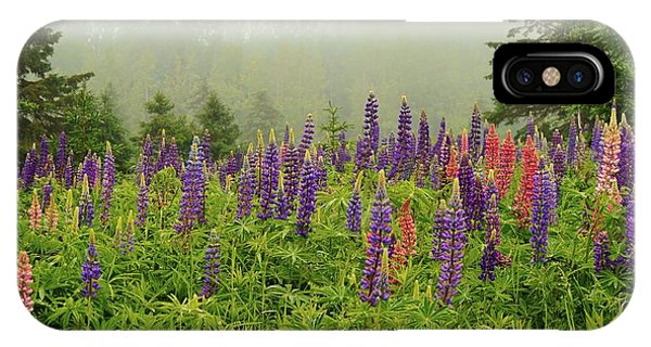 Lupins In The Mist IPhone Case