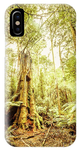 Greenery iPhone Case - Lush Tasmanian Forestry by Jorgo Photography - Wall Art Gallery