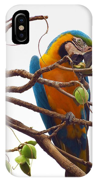 Macaw  IPhone Case