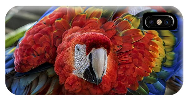 Macaw iPhone Case - Macaw Parrot by Mitch Shindelbower