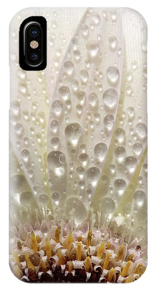 Macro Close Up Of A Daisy Flower IPhone Case
