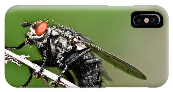 Macro Fly IPhone Case