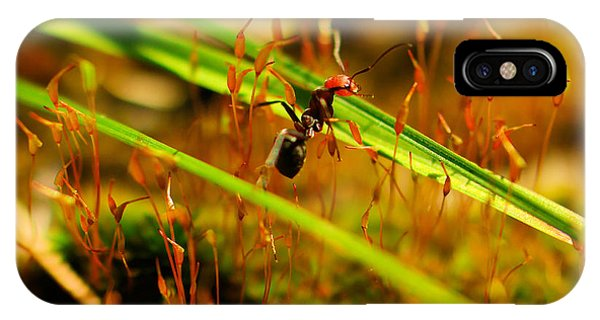 Little Things iPhone Case - Macro Of An Ant by Jeff Swan