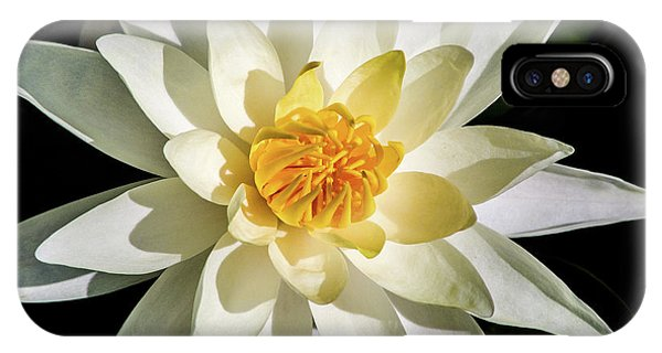 Macro Water Lily IPhone Case