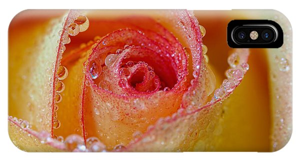 Macro Yellow And Red Rose IPhone Case