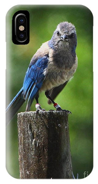Mad Bird IPhone Case