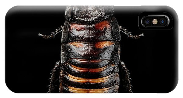 Madagascar Hissing Cockroach IPhone Case