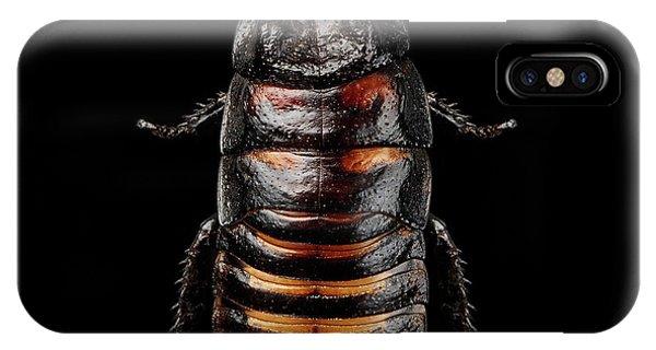 Madagascar Hissing Cockroach IPhone Case