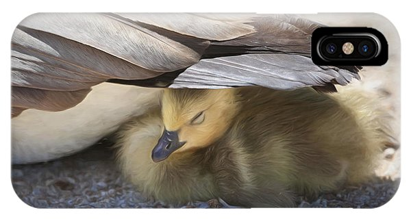 Goslings iPhone Case - Made In The Shade by Donna Kennedy