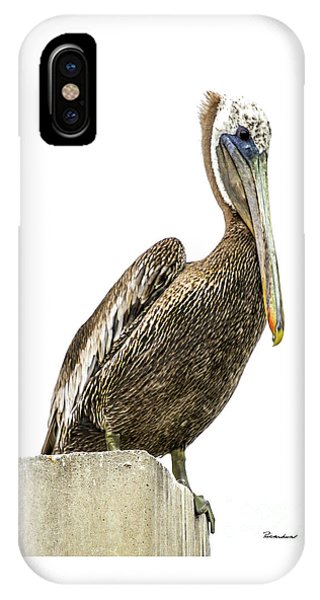 Majestic Gulf Shores Pelican 1071a IPhone Case
