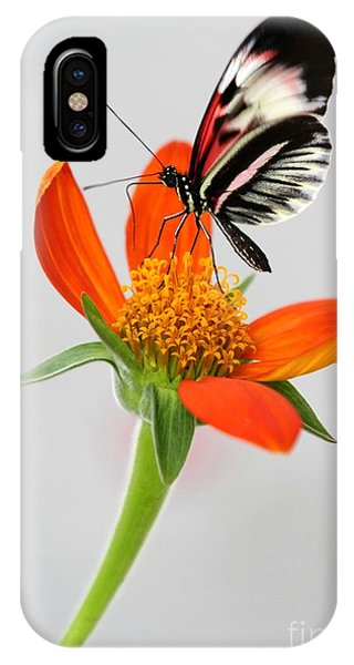 Magical Butterfly IPhone Case