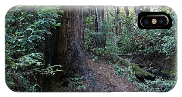 Magical Path Through The Redwoods On Mount Tamalpais IPhone Case