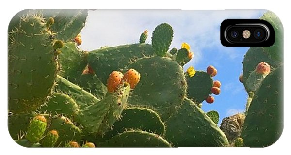 Flower iPhone Case - Magnificent #cactus With New Buds And by Shari Warren