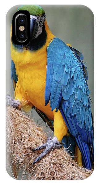 Magnificent Macaw IPhone Case