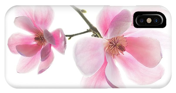 Magnolia Is The Harbinger Of Spring. IPhone Case