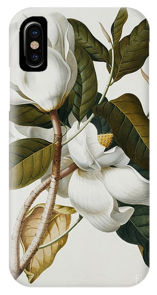 Botanical iPhone Case - Magnolia by Georg Dionysius Ehret