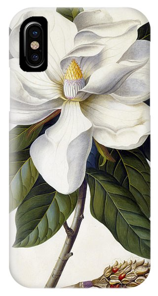 Bloom iPhone Case - Magnolia Grandiflora by Georg Dionysius Ehret