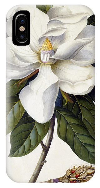 Botanical iPhone Case - Magnolia Grandiflora by Georg Dionysius Ehret